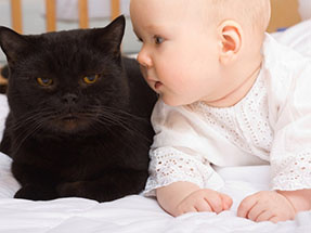 baby-play-with-cat.jpg 287×215 pixels
