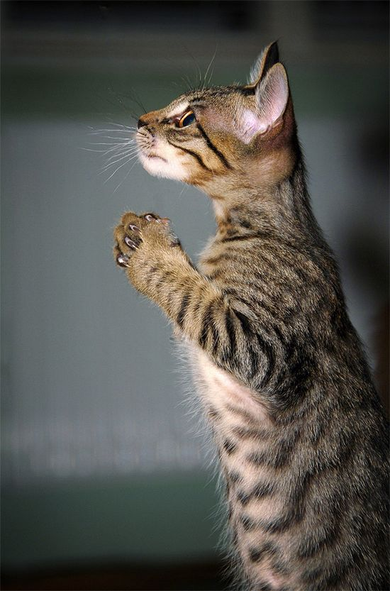 ~♥• Pets Palace •♥~ / Just saying a little prayer, then I get tuna.
