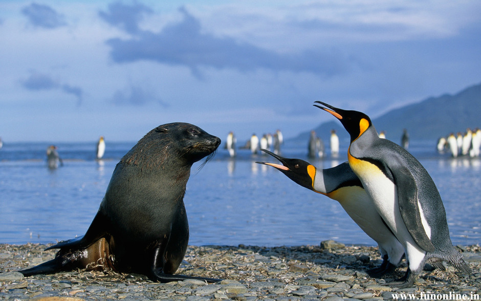 Funny-Seal-conversation-with-Penguins.jpg (1680×1050)
