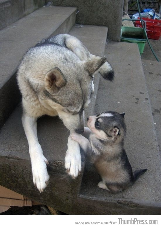 "Animals and Pets / ""Mom they called me husky."""