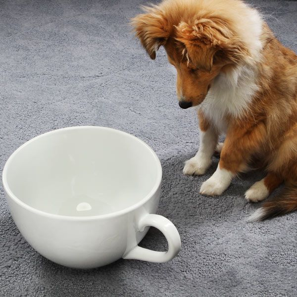 Amazon.com: World's Largest Coffee Cup: Toys & Games