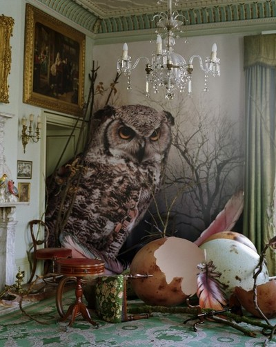 Eagle owl and hatched eggs by Tim Walker Shotover... - The sea has neither meaning nor pity.