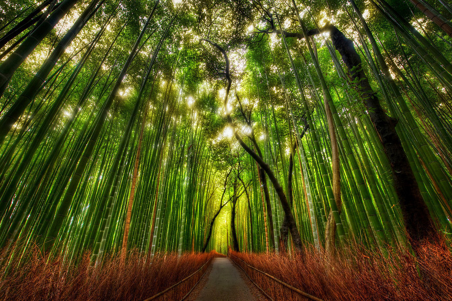 Kyoto bamboo forest - Imgur