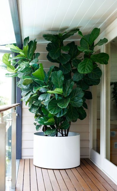 (10) Fancy - Plant life - Puka