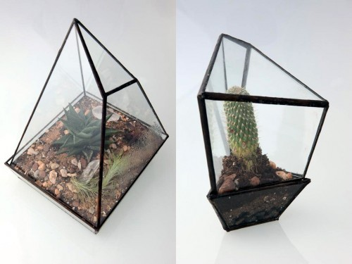 Assembly New York Geometric Terrariums   Colossal