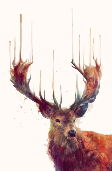 Red Deer // Stag Art Print by Amy Hamilton   Society6