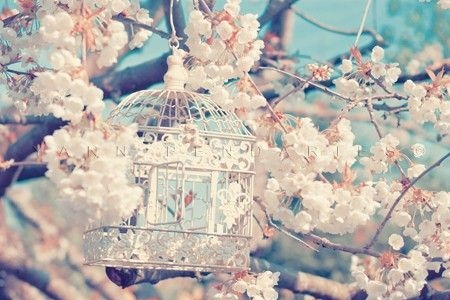 bird cage, blossom, flowers, runawaylove.blogg.no, vintage - inspiring picture on Favim.com