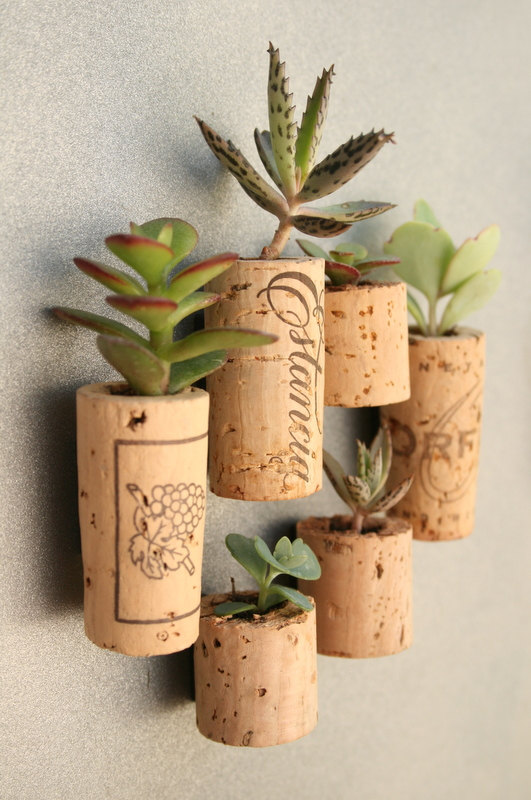CUSTOM Order for ranbo Succulent Cork Magnets Mixed by AlissaRose