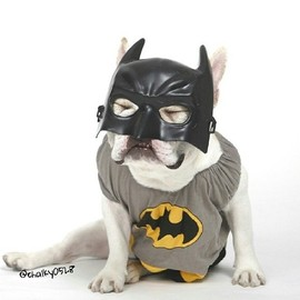 French Bulldog - Poor Little Batpig