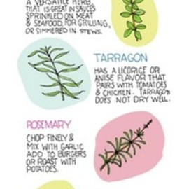 Illustrated Bites - The Basics of Herbs