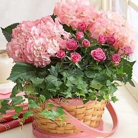 Pink Hydrangea's, roses, and ivy....