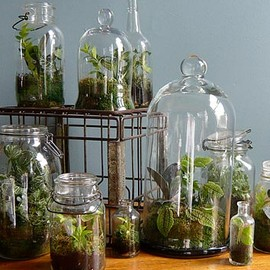 Learn to make your own terrarium.  Contributed content.