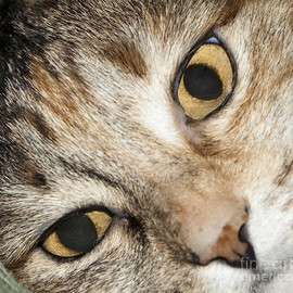 Fine Art America - Cat Eyes Close Up Photograph  - Cat Eyes Close Up Fine Art Print
