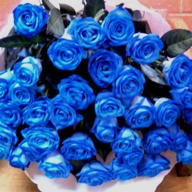 FLOWERS - BLUE ROSE
