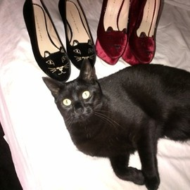 Charlotte Olympia - Cat flats and a cat