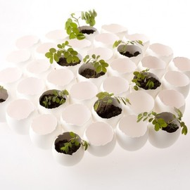 "Nosigner - ""hatch"", eggs shell and plants installation"