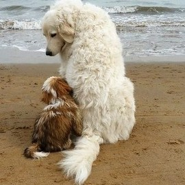 Best Friends: Beach buddies