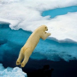Ralph Lee Hopkins - Leaping Polar Bears