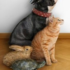 parakeet, dog, cat, rabbit, turtle