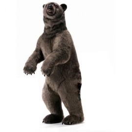 hansa  - bobo grizzly bear