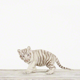 Sharon Montrose - Baby White Tiger No. 2