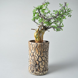 TOKY - Scratch Lightning Cylinder Pot + Commiphora SP