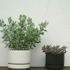 ARABIA - White Flower Pot (L) / Black Flower Pot (M)