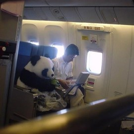 This is a real panda!