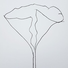 Ellsworth Kelly - Lotus