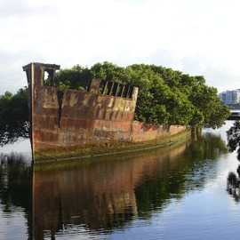 Floating Forest on the 102-Year-Old Abandoned Ship