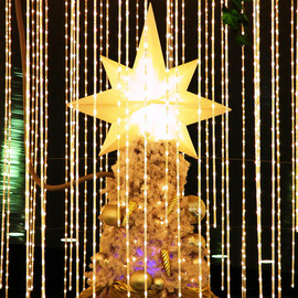 Image of XMAS star
