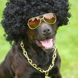 Dog - So Cool!