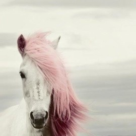 white horse with pink hair