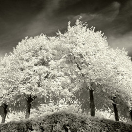 society6 - Ten Trees Stretched Canvas by Geoffrey Agrons