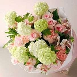 Flowers - Pink Roses Greenboll Anthurium