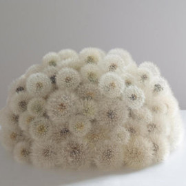 Christiane Löhr - Dandelion cushion (タンポポクッション)