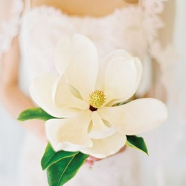 flower - Magnolia bouquet