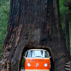 Redwood National Park, California - 'Drive Thru Tree'