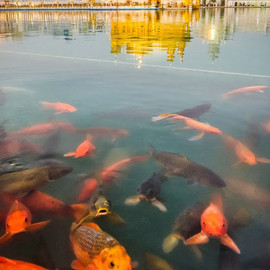 Amritsar,India - Golden Temple