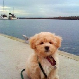 Top five puppy training tips, learn how to train your puppy :)