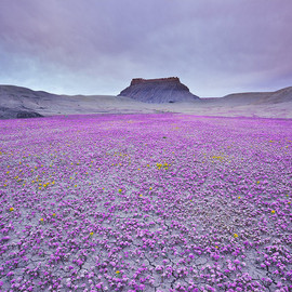 Utah - Badlands in Bloom