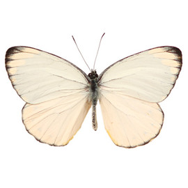 Nature - Butterfly