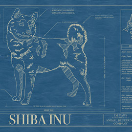 Animal Blueprint - Shiba Inu blueprint