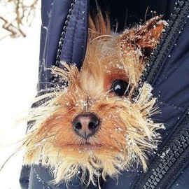It is too much cold today!