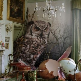 Tim WalkerShotover - Eagle owl and hatched eggs Shotover Park, Oxfordshire, 2010