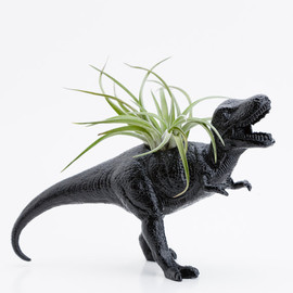boygirltees - Dinosaur Planter and Air Plant Room Decor
