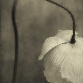 Dianne Poinski - flower, photograph