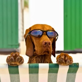 Dog with Sunglasses at Beach