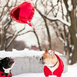 Dogs - Valentine's Day♡