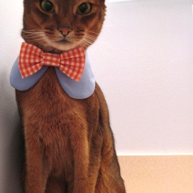 bow tie for cat